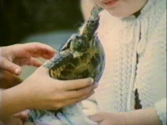 Внимание, черепаха! - Vnimanie, cherepakha!
