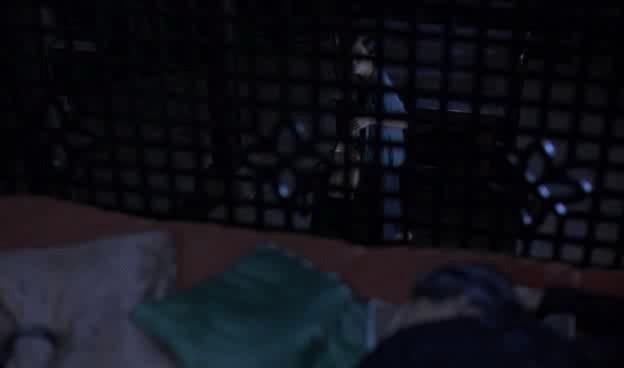 Аромат зеленой папайи - Mui du du xanh