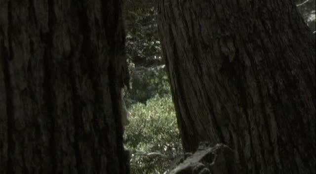 Проклятый лес - Haunted Forest
