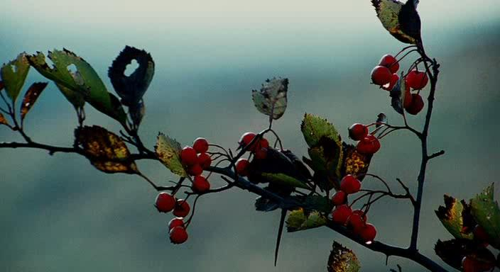 Любовь на линии фронта - The Poet