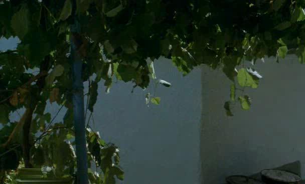 Полное дыхание - Polnoe dyihanie