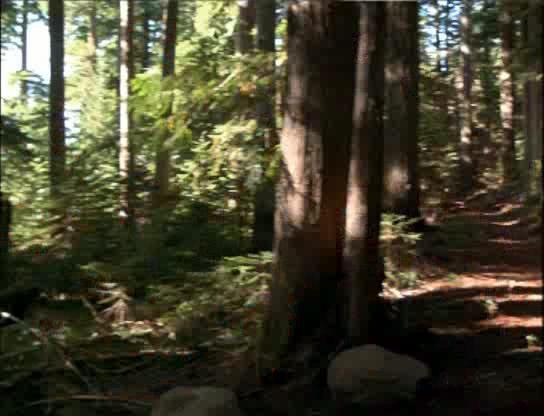 Лесной воин - Forest Warrior