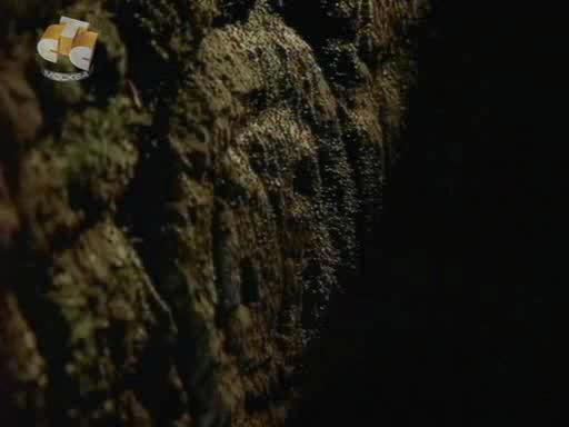 BBC - Взгляд в прошлое. Затерянные города майя. - BBC Time Watch. Lost Cities of the Maya