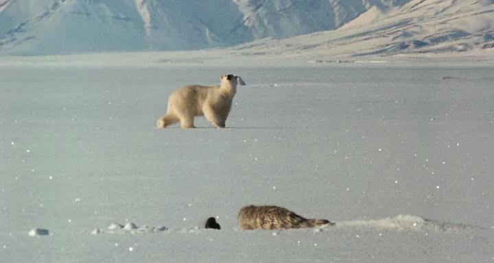 Мишка на севере - Arctic Tale