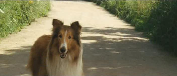 ����� - Lassie