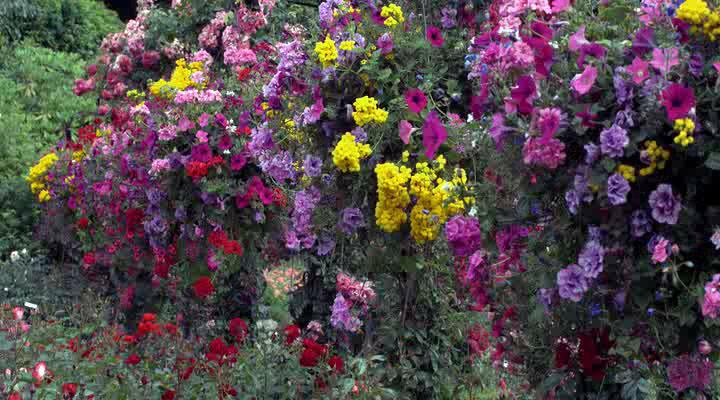 Цветы - HD Moods: Flowers