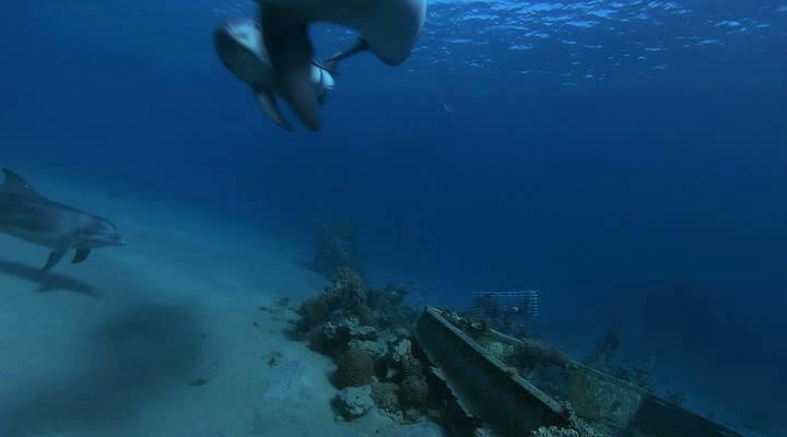Дельфины в океанской синеве - Dolphins In The Deep Blue Ocean