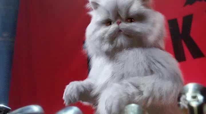 Кошки против собак - Cats $ Dogs