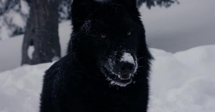 Девушка и волки - La jeune fille et les loups