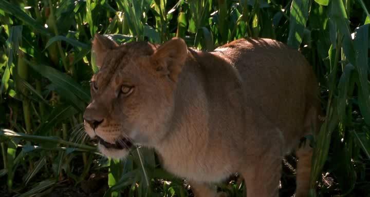 Подержанные львы - Secondhand Lions