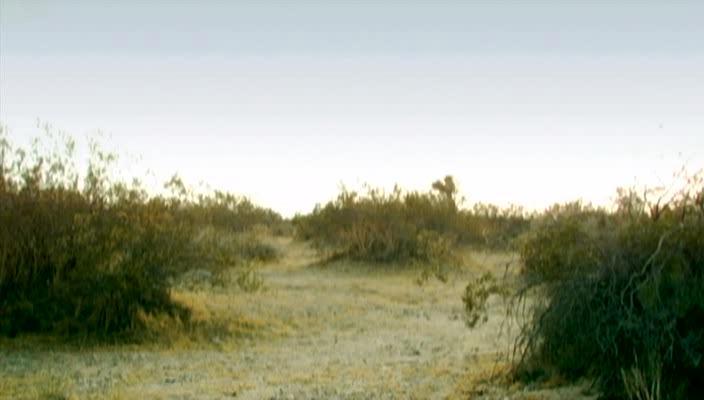 Зыбучие пески: Хроники собственной смерти - Legend of the Sandsquatch