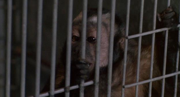 Обезьяна-убийца - Monkey Shines