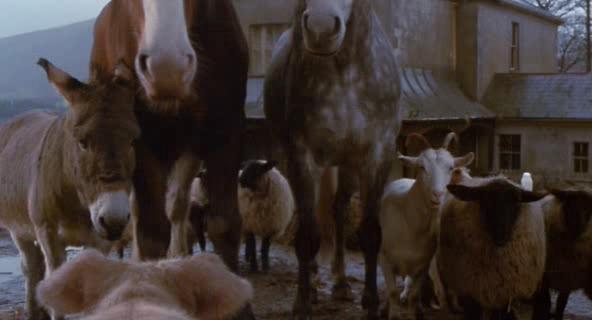 ������� ���� - Animal Farm
