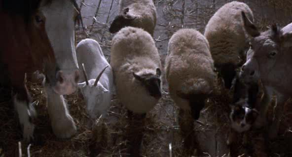 Скотный двор - Animal Farm