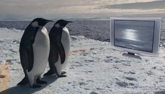 Фарс пингвинов - Farce of the Penguins