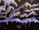 Рождество с Белоснежкой - (Рђ Snow White Christmas)