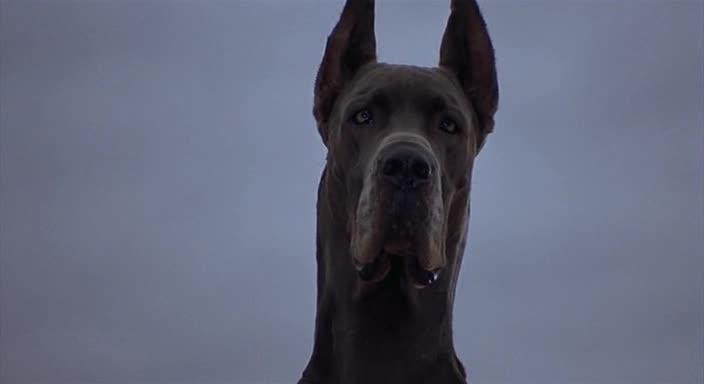 Лохматый спецназ - Good Boy!
