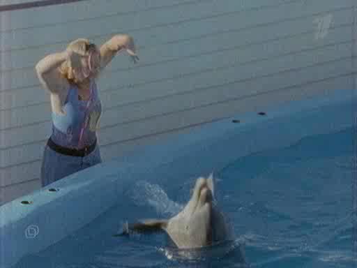 Живая природа: Думают ли дельфины? - Dolphins Deep Thinkers?