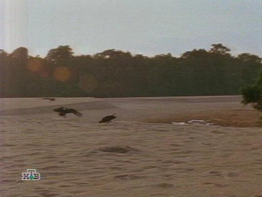 �������� ��������� ���� - Creatures Of The Amazon