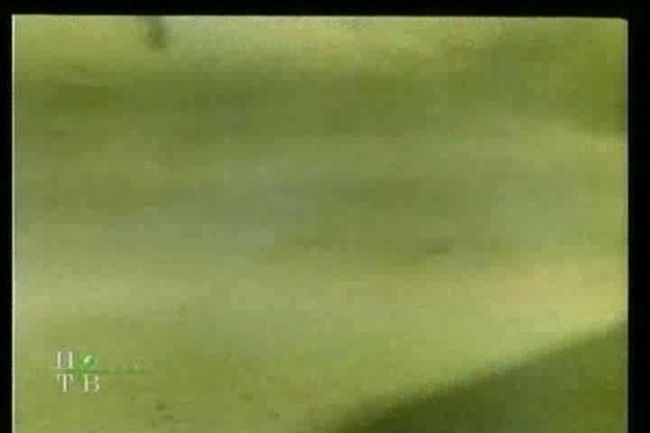 Чьи в лесу шишки - Chi v lesu shishki