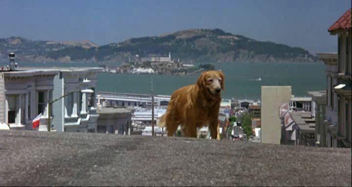 Дорога домой 2: Затерянные в Сан-Франциско - Homeward Bound II: Lost in San Francisco