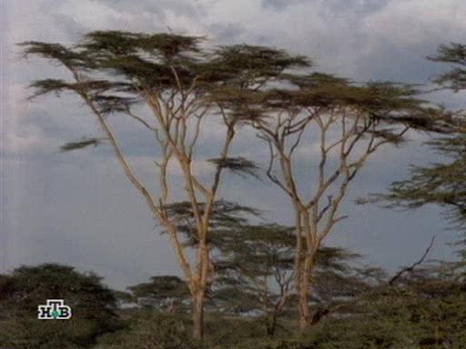Мозаика серенгети - Serengeti Jigsaw