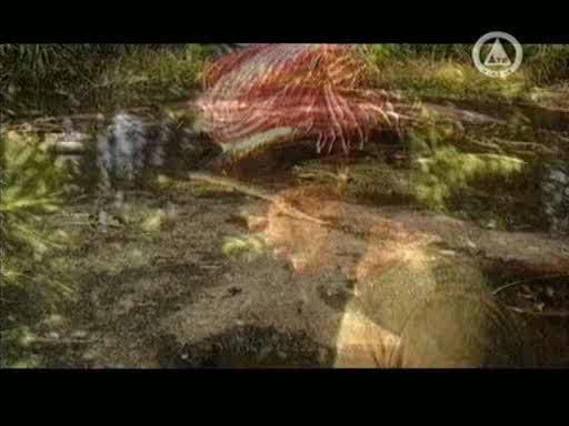 Неизвестная планета: Путешествие в страну девяти драконов - Putishesvie v stranu devati drakonov