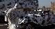 102 далматинца - 02 Dalmatians