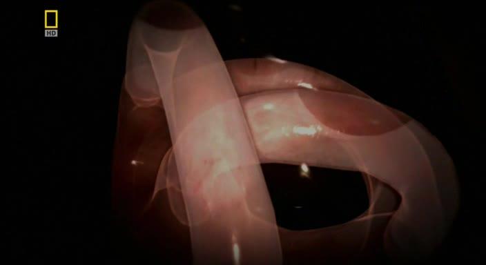 Невероятное тело человека - Incredible Human Machine