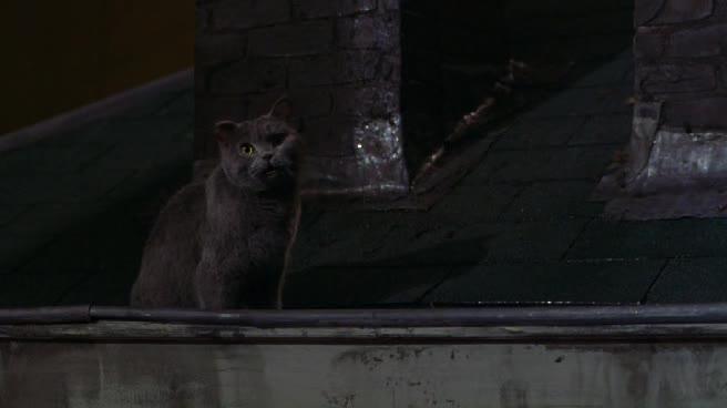 Леди-кошка - Minoes