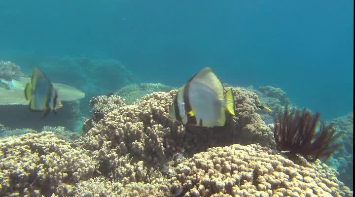 Чудеса океана 3D - Ocean Wonderland