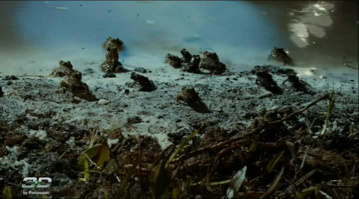 Тростниковые жабы: Оккупация - Cane Toads: The Conquest
