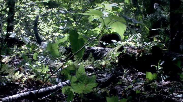 ����������� ������� - M�che Blanche, les aventures du petit castor