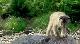Приключения бобрёнка - Mиche Blanche, les aventures du petit castor