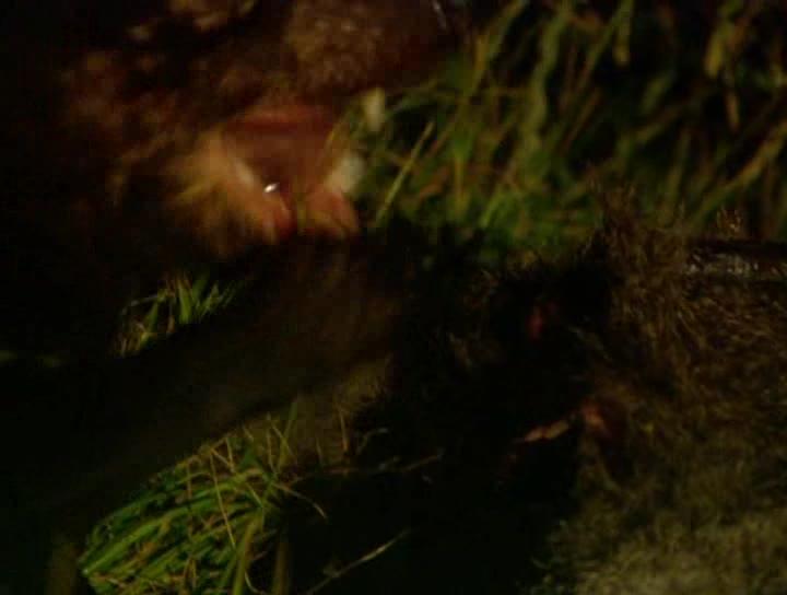 Animal Planet: Жемчужины дикой природы Австралии - Animal Planet: Australian Wildlife Encounters
