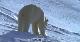 Белая планета - La planиte blanche