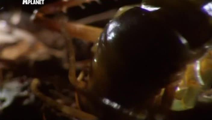 Войны жуков-гигантов - Monster bug wars