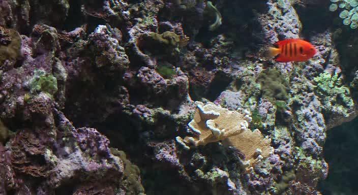 Живые пейзажи. Подводный мир Гавайи - Living Landscapes. Underwater Paradise Hawaii