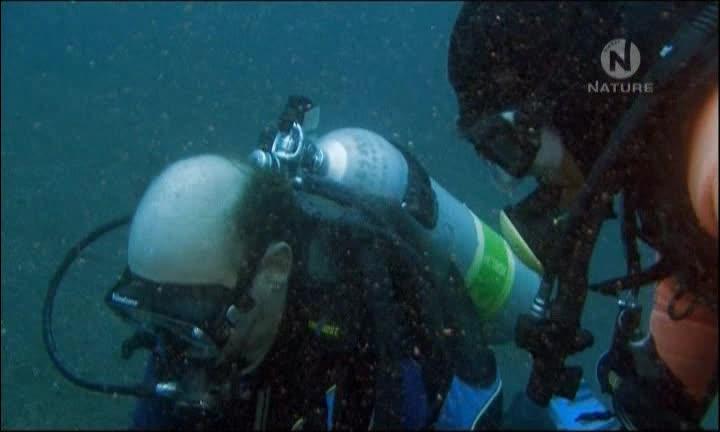 Море причудливых существ - Sea of Creepy Monsters