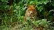 Мифы леса - Mythos Wald
