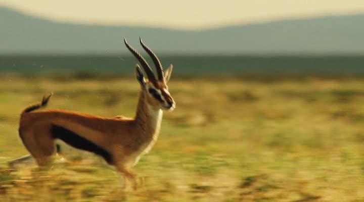 Национальный парк Серенгети - Serengeti