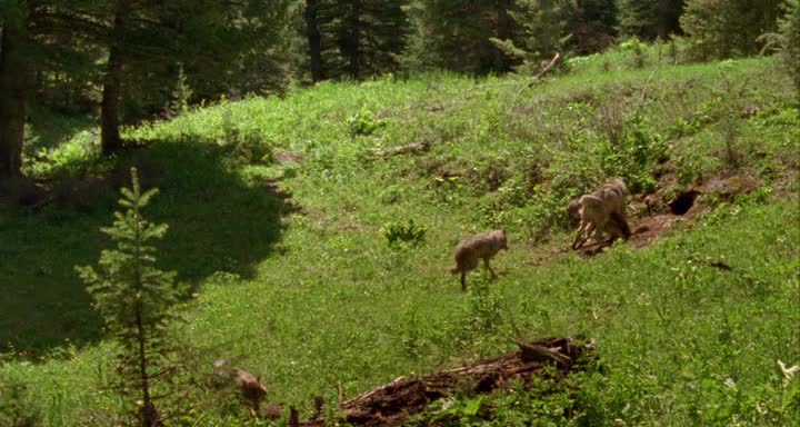 Волчье лето - Ulvesommer