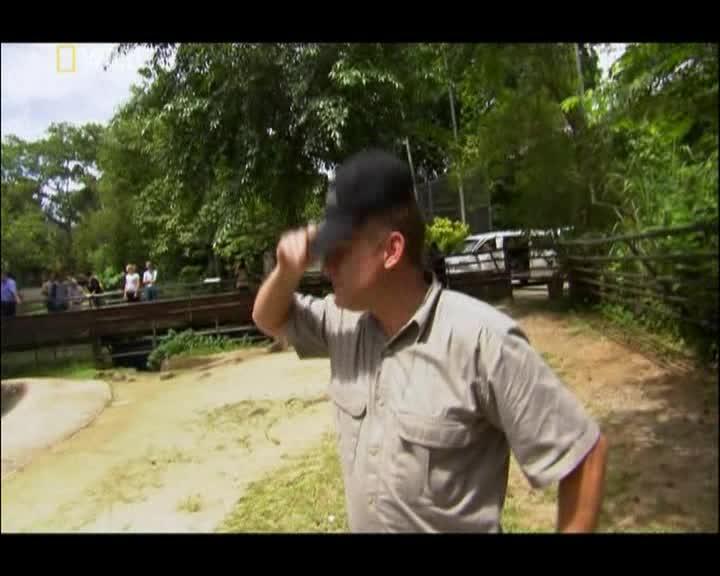 Опасные встречи:Шпионы на территории бегемотов - Dangerous Encounters with Brady Barr