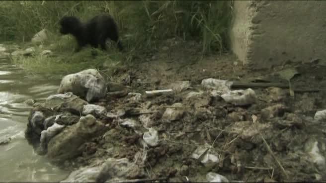 Земля: Жизнь без людей - Aftermath: Population Zero