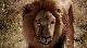 Волшебная поездка в Африку - Magic Journey to Africa