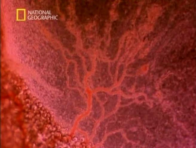 Жизнь до рождения: в утробе матери - человек - In the womb