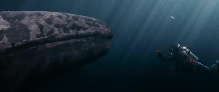Все любят китов - Big Miracle