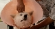 Пес, смотрящий на звезды - Hoshi mamoru inu