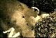 Тайны века. Нестор Махно. Золотой миф - Taynyi veka. Nestor Mahno. Zolotoy mif
