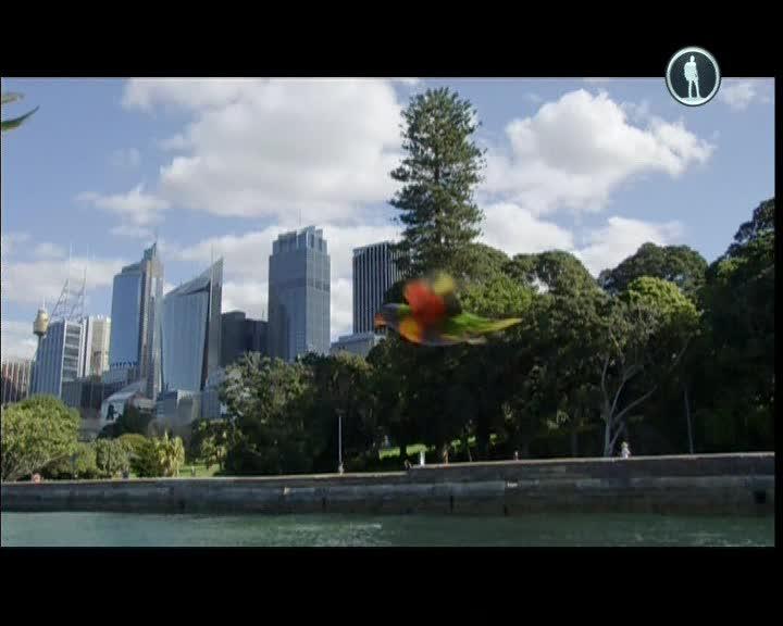Мир с высоты птичьего полета. Азия и Австралия - ВВС: Earthflight. Asia and Australia